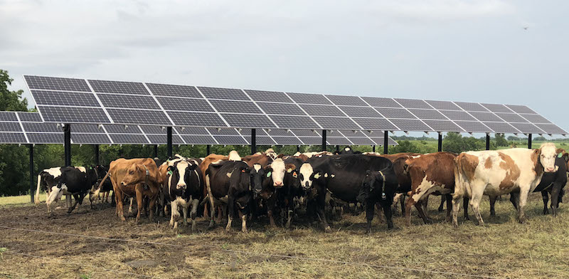 research on integration of solar photovoltaic systems with livestock